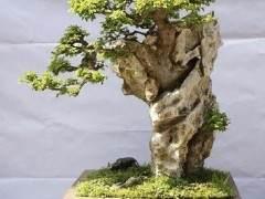 附石盆景的雅趣探讨