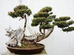 世界博览会举办权给如皋花木盆景业带来无限商机
