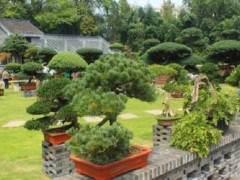 """如皋市努力打造""""中国花木盆景之都""""的新形象"""
