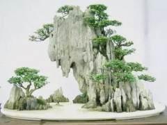 附石盆景 让盆景变得更有趣