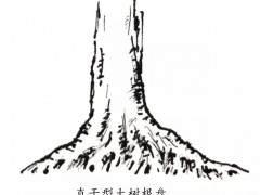 杂木盆景的根部造型要点