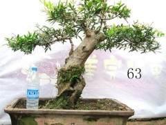 北京盆景协会总结会在北京景山公园召开