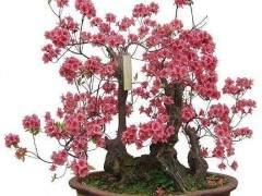 乌鲁木齐的花草盆景价格仅150元