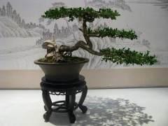 扬派盆景博物馆是瘦西湖景区的一个重要区域