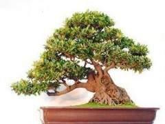 杭州春美绿植盆景出租公司