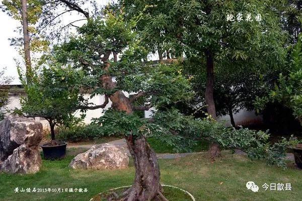 杭州鲍家盆景园