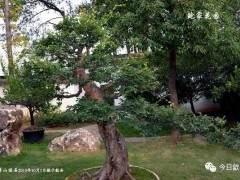 安徽歙县鲍家盆景花园