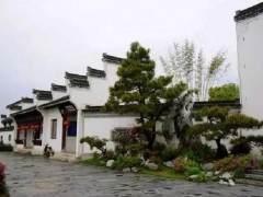 名不见经传的皖南歙县的鲍家盆景花园