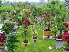 古徽州文化旅游区--牌坊群·鲍家盆景花园