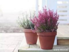10种最耐寒的花卉盆景植物