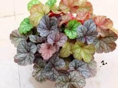 8种最耐寒的盆景植物 非常适合秋冬季养