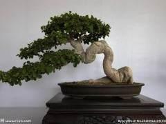 西宁首届盆景艺术展在西宁植物园举办
