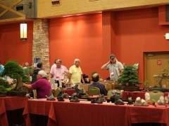科罗拉多州丹佛市举行的美国盆景学会