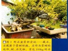 图解 梁振华怎么杂志岭南盆景的过程