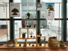 """上海植物园2018秋季""""海style""""的盆景展"""