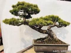 金华县花卉盆景实现产值超1亿元