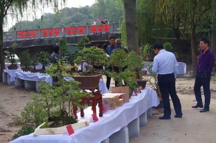 河南盆景协会信阳委员会第二届盆景展