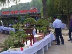 河南省盆景协会信阳委员会第二届盆景展