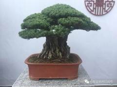 广东省盆景协会布展组兄弟们点赞