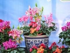 中原花博会筹备就绪 500万盆鲜花盆景恭迎八方宾