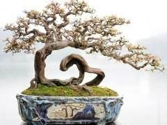 芳村又是中国岭南盆景艺术的发祥地之一