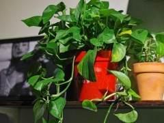 这6种盆景植物市场生意非常好