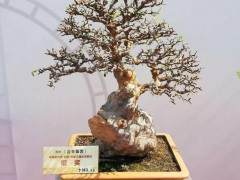 泉州市第十七届盆景赏石展览