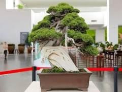 云岗园林博物馆将举办盆景艺术展