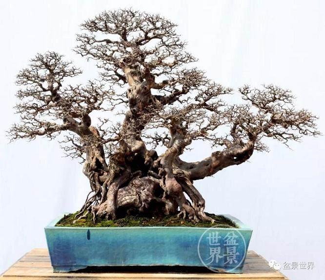 2018年南方绿化苗木博览会暨国际盆景协会