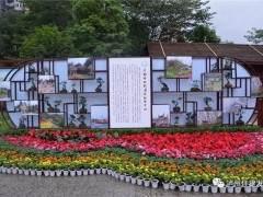 四川省第十届盆景展在泸州龙透关公园开幕