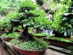 2012年盆景种植面居前5位的为广东、四川、江苏