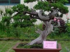 2015年广州国际盆景及花园花店用品展览