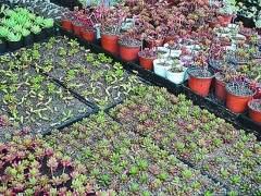 浙江检验检疫局截获的50万粒多肉植物种子