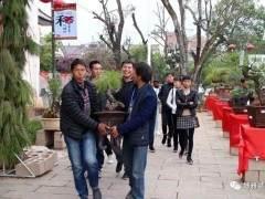 第八届云南巍山小吃节之盆景艺术展