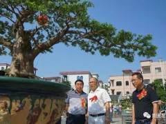 广东省盆景协会会长曾安昌等领导分别获奖的单位