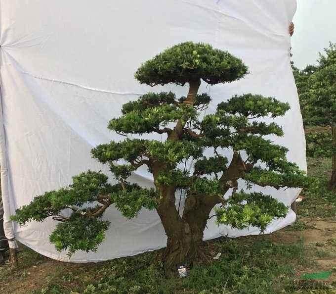第九届中国国际盆景协会盆景展览