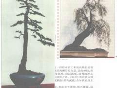 孤松垂柳 各有姿——赏罗群杰的柽柳盆景作品