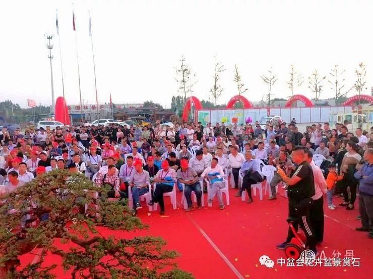 沭阳花木节盆景拍卖活动火爆 成交额达70多万元
