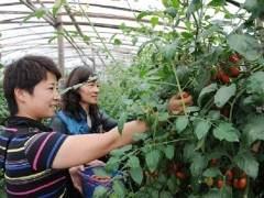 樱桃盆景树的养护指南