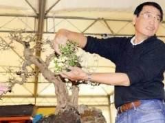 中国盆景艺术家--郑在权