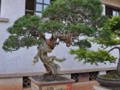 张夷逸品盆景观摩暨研讨会在江苏苏州举办