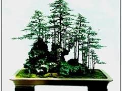 浙江省乐清胡春芳创作的榆树盆景《山林雅趣》