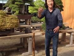 我在日本花园做盆景顾问时一些往事
