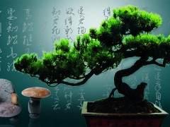 第六届中国盆景展览于10月10日在泉州市落下帷幕