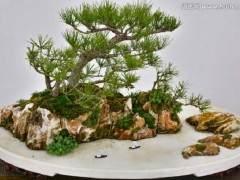 关于天津山水盆景艺术特点