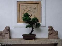 北京盆景艺术研究会常务副会长 -- 石万钦