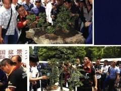 2018BCI国际盆景大师作品展在上海成功举办