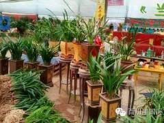 山东青州花卉盆景市场「图」