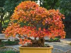 家庭花卉盆景在冬季的防寒措施