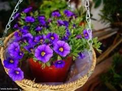 花卉盆景在秋季的病虫害防治